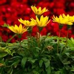 Kwiatki w Green Lake Park