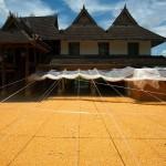 Menghan, Dai Theme Park, suszenie kukurydzy